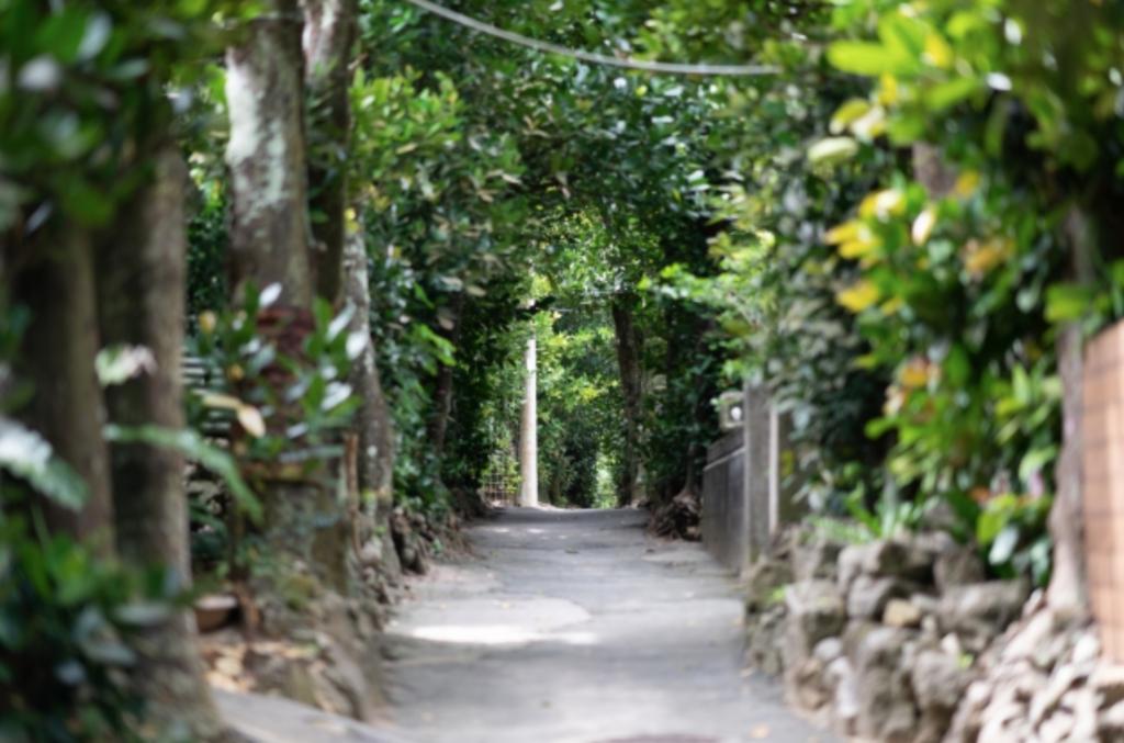 無料の観光地2 備瀬のフクギ並木